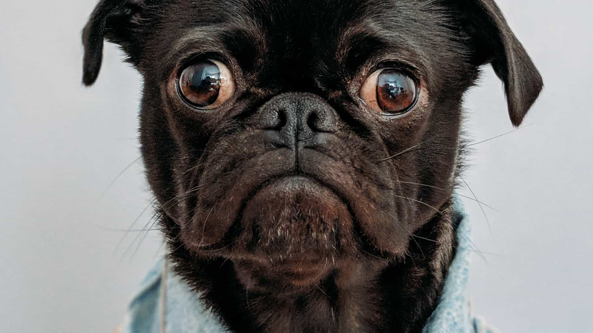 lazy loading pug featured image